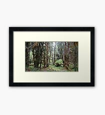 Hoh Rainforest, Olympic National Park, Washington State, USA Framed Print