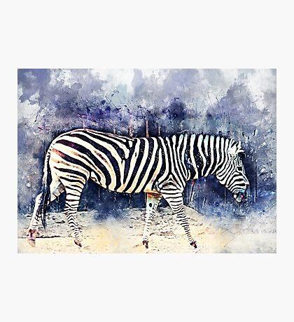 Zebra art Photographic Print