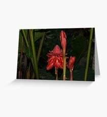 Red Torch Ginger Lily - Glossy, Exotic and Wonderful Greeting Card