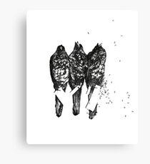 Natural History - Ants Canvas Print