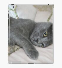 Grey Kitten Relaxed On A Bed iPad Case/Skin