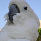 Ruffled Feathers Of A Blue Eyed Cockatoo by taiche