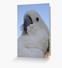 Ruffled Feathers Of A Blue Eyed Cockatoo Greeting Card
