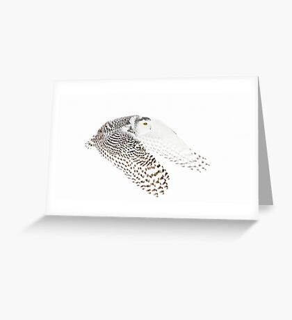 Wings Out - Snowy Owl Greeting Card