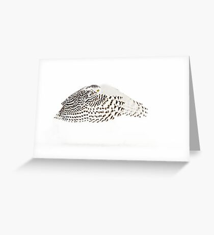 The Count - Snowy Owl Greeting Card