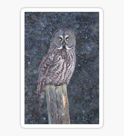 Great Grey Owl in Snow Sticker