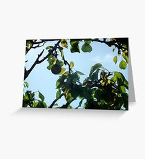 The Partridge Has Flown.. Greeting Card