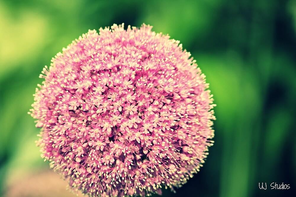 Flower  by Usama Javed