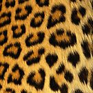 Leopard  by Mikeb10462