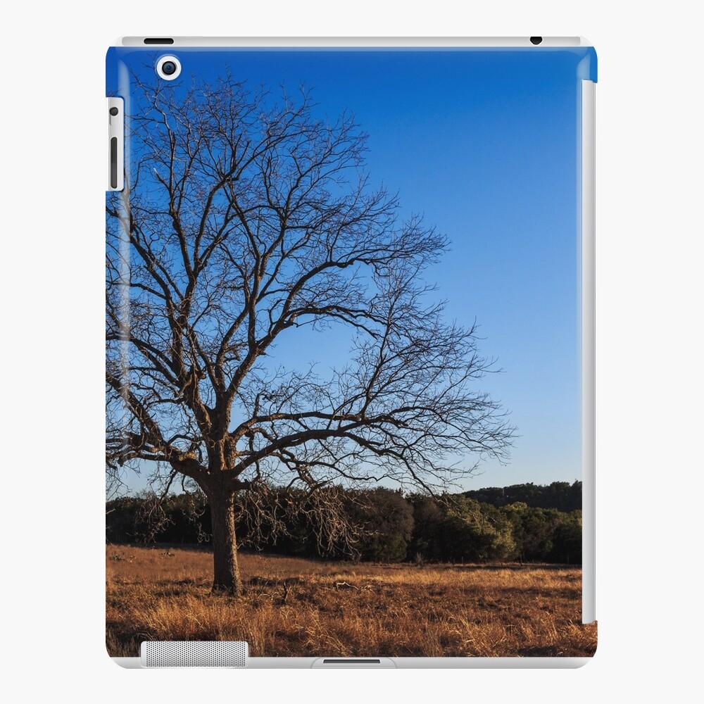 Old Pecan tree iPad Case & Skin
