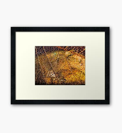 Roots and Veins Framed Print