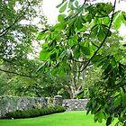 Herrlich grün - Lews Castle Grounds von BlueMoonRose