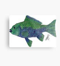 Green/Blue Fish Metal Print