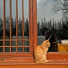 West Lake Cat, Hangzhou, China by Simone Maynard