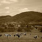 Friesian Cows by Richard  Windeyer