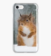 Red Squirrel in the Snow iPhone Case/Skin
