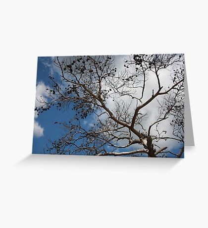 Skeleton of A Pine Tree Against Sky and Clouds Greeting Card