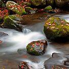 Autumn Cascades by Terri~Lynn Bealle