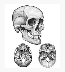 Skull multi view Photographic Print