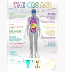 The Organs Poster