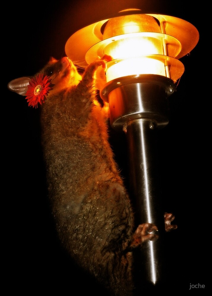 Possum up a Lamp post by joche
