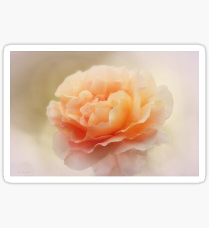 Apricot Rose Sticker