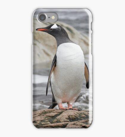 Gentoo Penguin iPhone Case/Skin