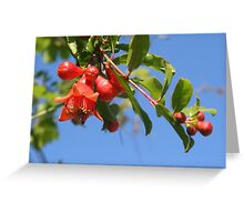 Pomegranate Flowers And Blue Skies Greeting Card