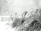 Snow Light in Black and White by Susan Werby