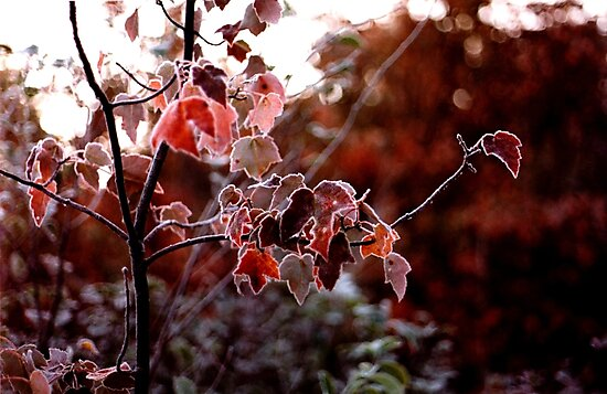 Frosted Leaves by Wayne King