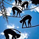 Sky Monkeys by Heather Friedman