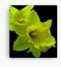 Daffodils Rejoicing Canvas Print