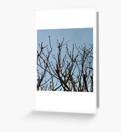 Trees on blue Greeting Card