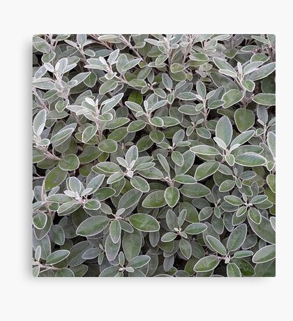 Leaves of grey Canvas Print
