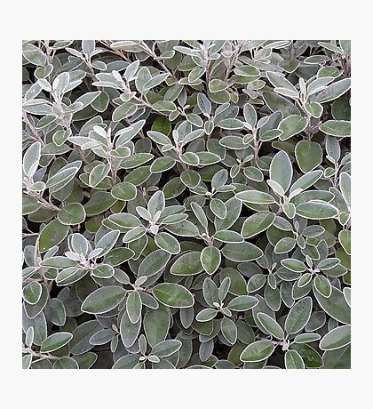Leaves of grey Photographic Print