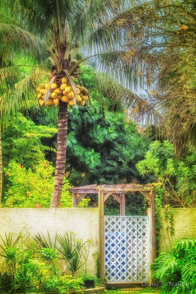 Coconut palm tropical gateway by Owed To Nature
