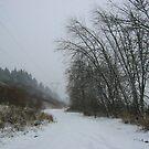 Burnt Bridge Creek Trail in Snow by Deborah Singer