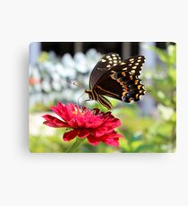 Butterfly On Red Flower Canvas Print