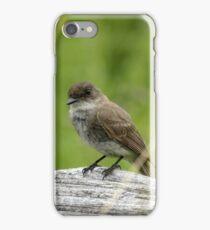 Eastern Phoebe iPhone Case/Skin