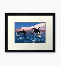 Killer Whales In The Arctic Ocean Framed Print