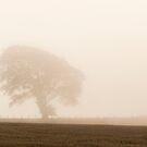 A Lone Tree In The Mist by Lynne Morris