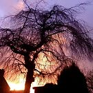 Sunset Willow by mikebov