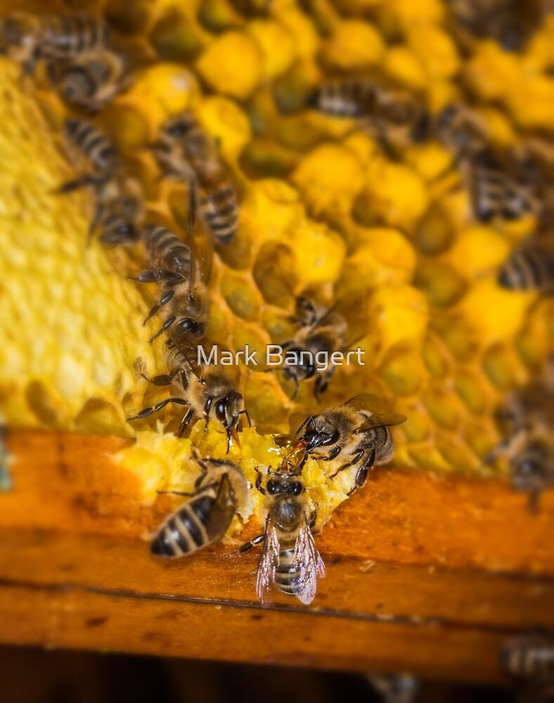 Honey for breakfast by Mark Bangert