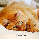 I Miss You, Maine Coon Cat by Catherine Sherman