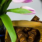 Tulips and sweets  by katarina86