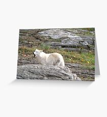 Loup Greeting Card