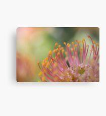 Nodding Pincushion Flower Metal Print