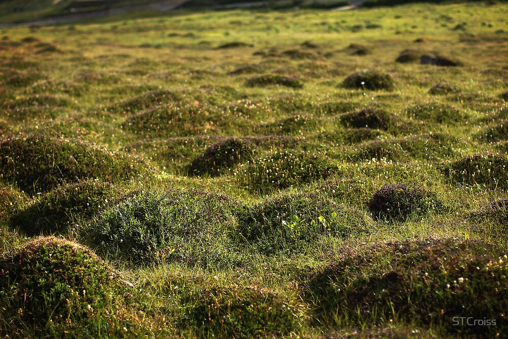 Green Hillocks by STCroiss