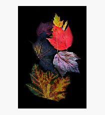 Leaf Cluster  Photographic Print