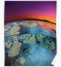 Dusk at the Red Sea Reef Poster